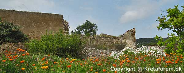 Kreta - Old ruin and nice flower
